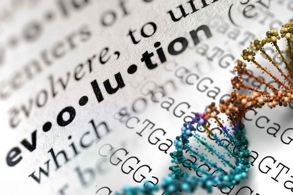 Fluency Friday   Evolution – Part II